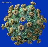 HIV1.jpg